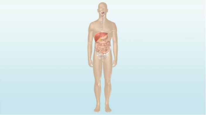 Hoe de darm werkt – meer informatie over de belangrijkste functies